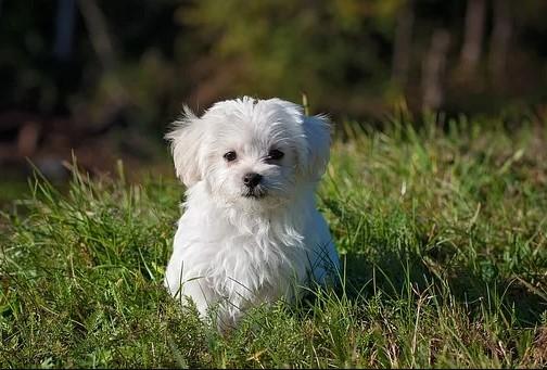 Gør livet nemmere med en hundelem