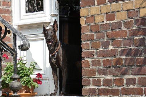 Hund ved havedør