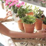 Fem trin til at forvandle dit hjem til den oase du fortjener
