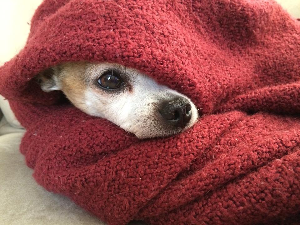 hund i strikket tæppe