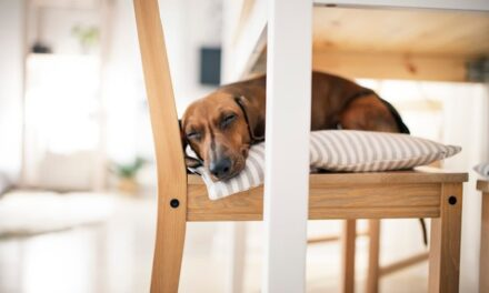Snorker hunden? Det her kan være forklaringen