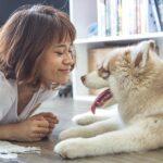 Find det rette foder til din hundeven